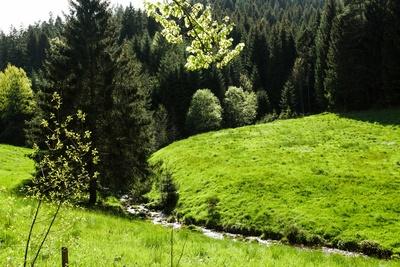 Am Sankenbach bei Baiersbronn 4