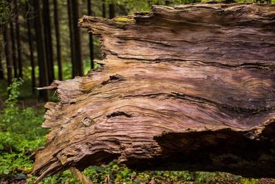 Totholz ist Lebensraum 1