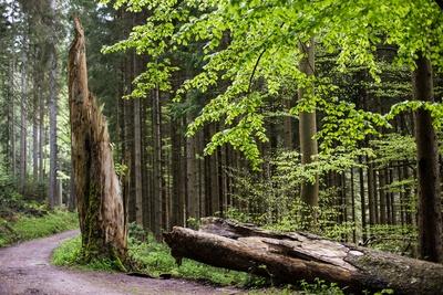 Totholz ist Lebensraum 3