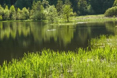 Sankenbachsee bei Baiersbronn 2