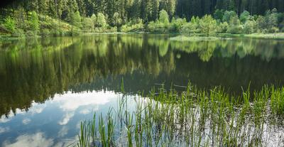 Sankenbachsee bei Baiersbronn 4
