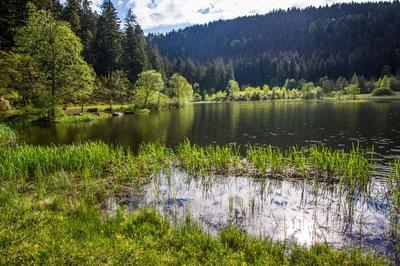 Sankenbachsee bei Baiersbronn 6