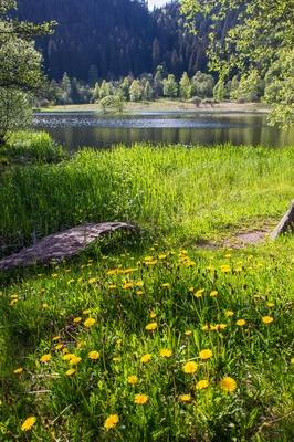 Sankenbachsee bei Baiersbronn 8