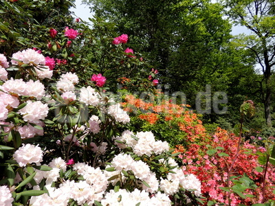 Frühlings - Blütenpracht