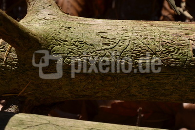 Handschrift in Holz