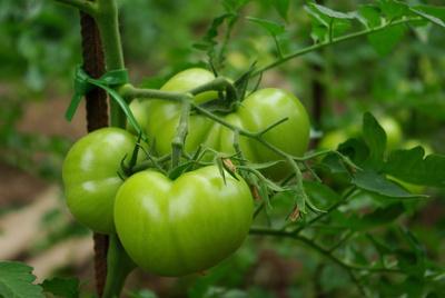 "Filmtitel....""grüne Tomaten"""
