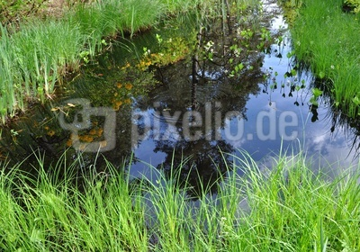 Wasserspiegelung im Teich 1