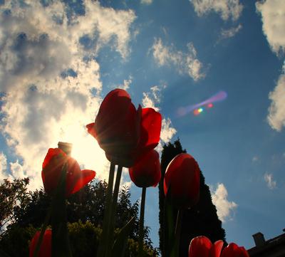 Maiblüten in Omas Garten 05