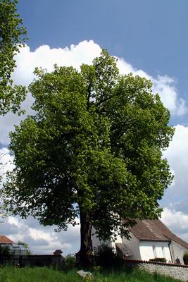 Einfach nur ein schöner Baum