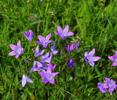 Wiesenblueten im Mai