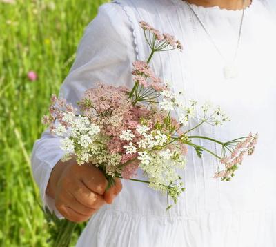 Zarte Wiesenblumen