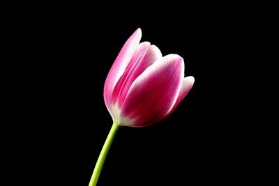Blüte 374
