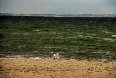 verliebte Möwen am Strand