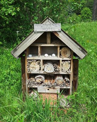 Zimmer frei für Wildbienen