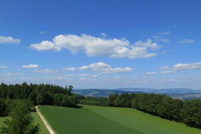 Getreidefelder auf dem Homberg