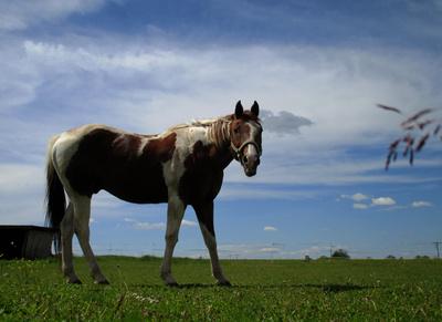 Pferde.Glueck