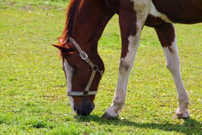 Pferde.Glueck 03