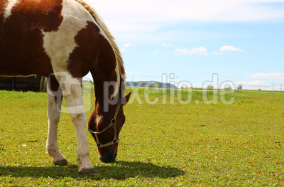 Pferde.Glueck 04