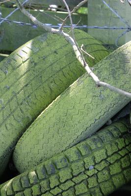 grüne Reifen....Bio????