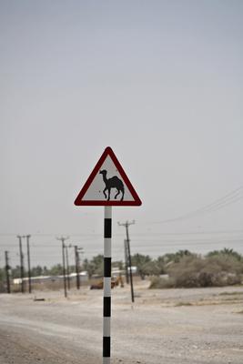 Vorsicht Kamele