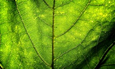 Chlorophyll Pipeline