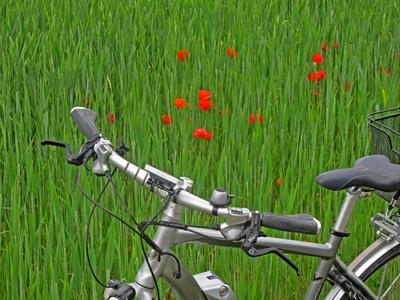Radtour durch Kornfelder