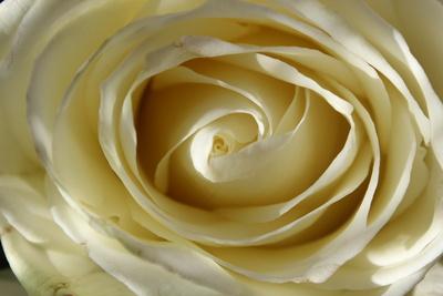 Das Auge der Rose ..von oben betrachtet