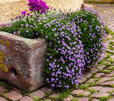 Antike Blumenkübel in alten Bauerntrögen 01