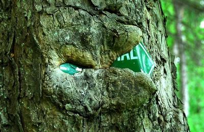Baum frisst Schild - Teil 2