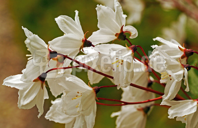 Blüten am Baum . . . . .