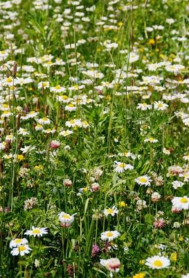 Blütenwelt in der Moorlandschaft 02