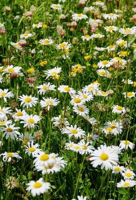 Blütenwelt in der Moorlandschaft 03