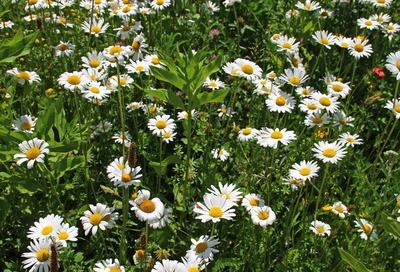 Blütenwelt in der Moorlandschaft 04