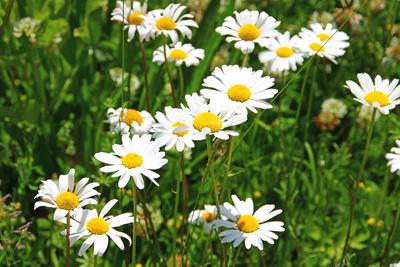 Blütenwelt in der Moorlandschaft 05