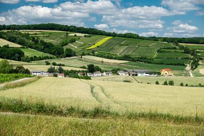 Weites Land – Weinviertel bei Puch