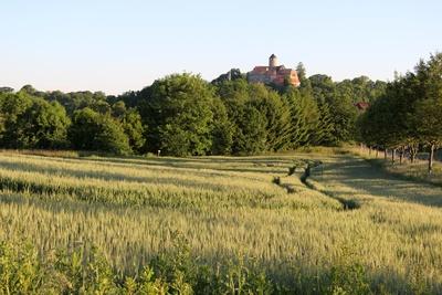 Burg Schönfels im Sommer