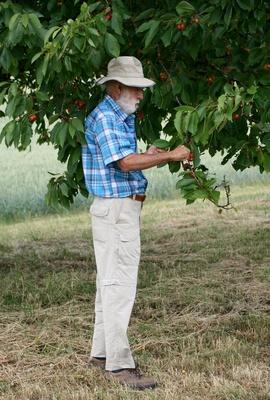 opa unterm kirschbaum