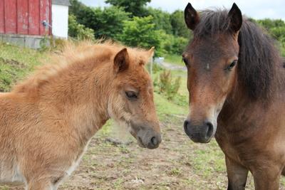 Pony Geschwister