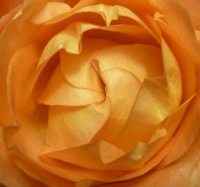 Rose mit Faltverschluss