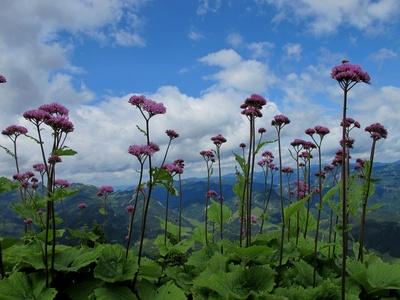 Bergblumen am Wegesrand