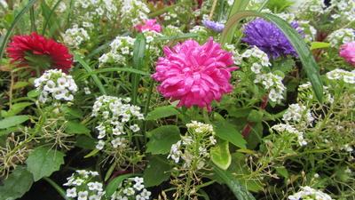 Sommerblumen nach dem Regen