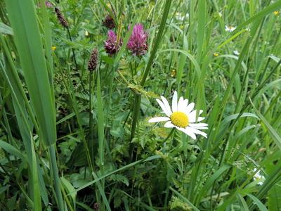 Blühende Bergwiese 2