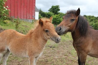Pony Geschwister knudeln