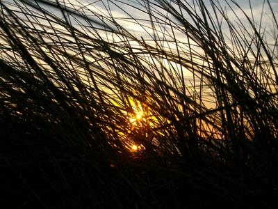 Sonnenuntergang hinter sich im Wind dehnender Düne