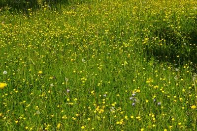Blumenwiese als Fond