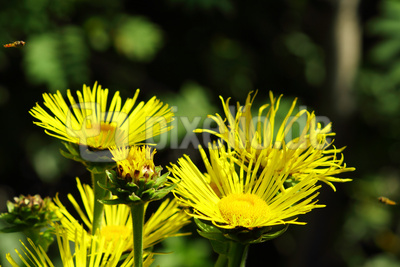 Gelbe Blütengruppe