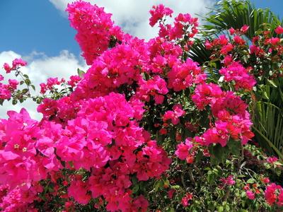 Mexikanische Blütenpracht