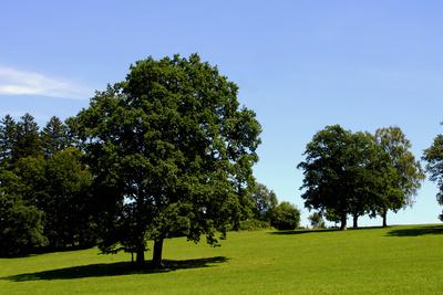 Baum.Landschaft 02
