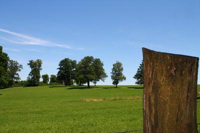 Baum.Landschaft 03