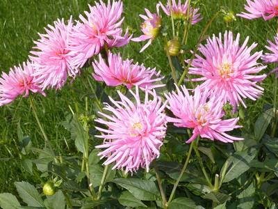 Blätter u. Blumen